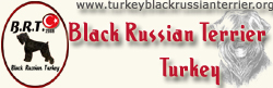 Black Russian Terrier Turkey